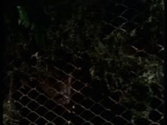 vlcsnap-2014-12-11-09h42m43s11