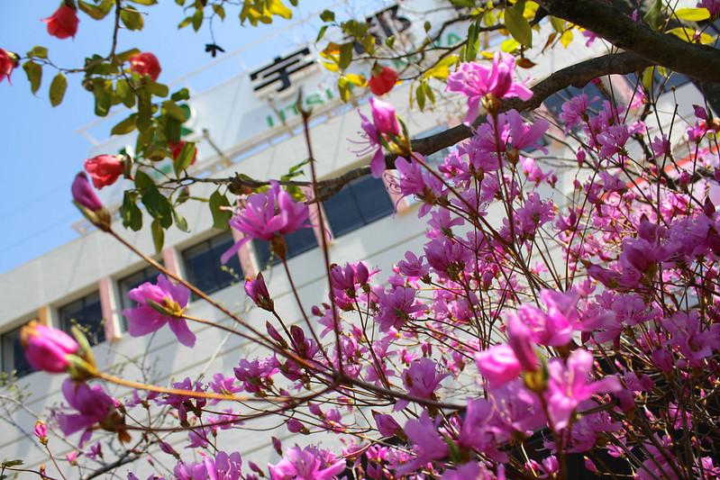 2014-04-12_00005_守門岳.jpg