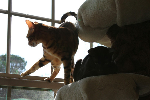 Whiskers & Paws: February 2015 Edition