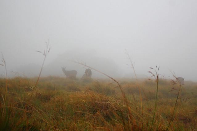 Sambhur in the morning fog