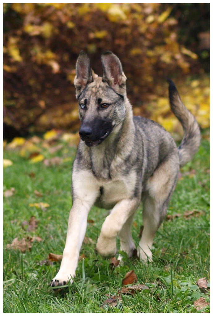 Photographie d'animaux - conseils pour devenir un pro ! - Page 3 15687538118_d1aefb4ee8_b