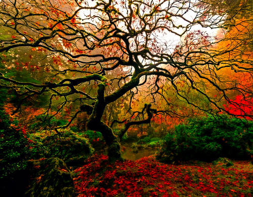 autumn fall nature fog oregon portland landscape fallcolors foggy japanesemaple pacificnorthwest dreamy portlandjapanesegarden portlandoregon softlight diffusedlight