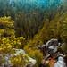 Hobbit forest by Pavel_Diabkin