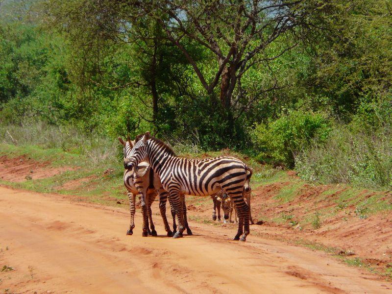 Kenia2007-0446