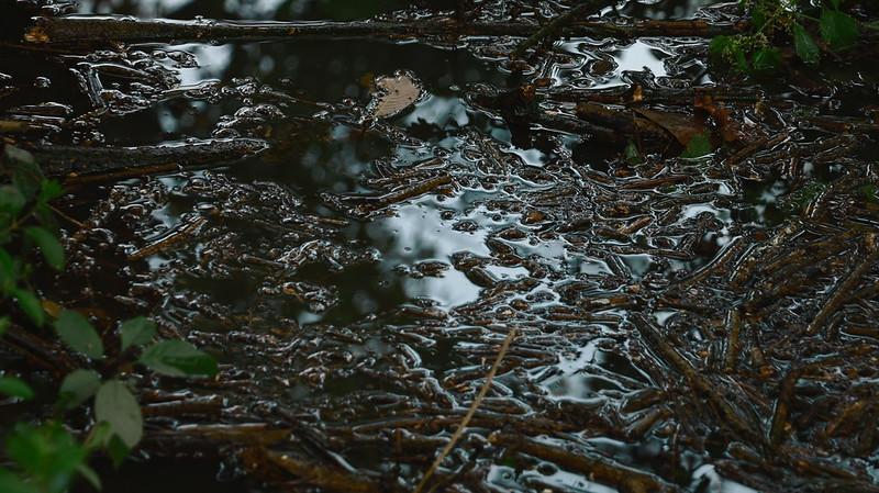 Cabane Abandonnée & Nature Sauvage