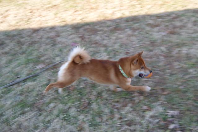 Jiro running