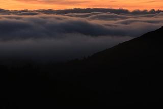Fog_SS_silhtte