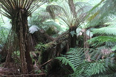 arecales, tree, plant, flora, forest, natural environment, ferns and horsetails, elaeis, biome, vegetation,