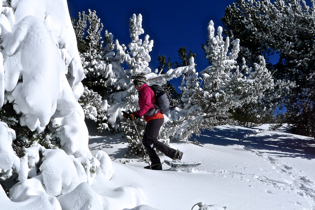 Mammoth Cross Country Ski & Snowshoe
