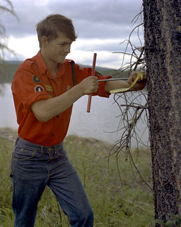 Inspecting a tree, Blue Lake, Alberta