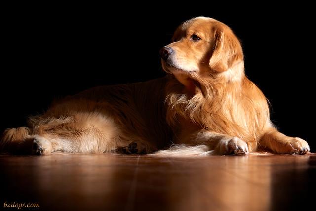 Canine Modeling