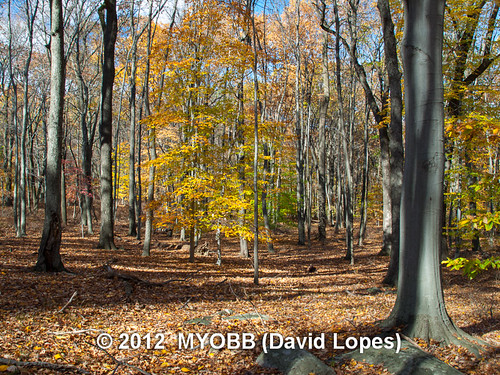 color fall nature wildlife olympus leafs audubon e510 bernardsville newjerseyaudubonsociety theschermanhoffmanwildlifesanctuary