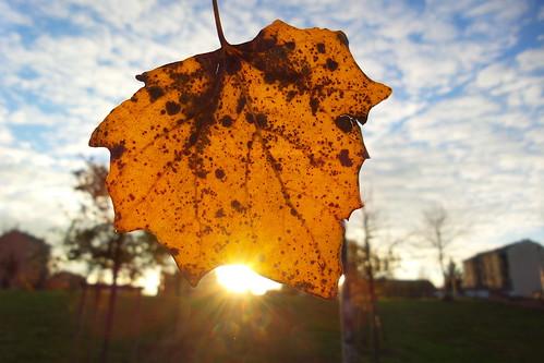 Una foglia d'autunno al #tramonto