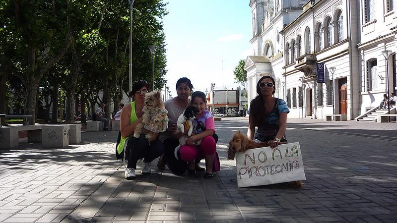 El esfuerzo de proteccionistas por mejorar la calidad de vida de los perros