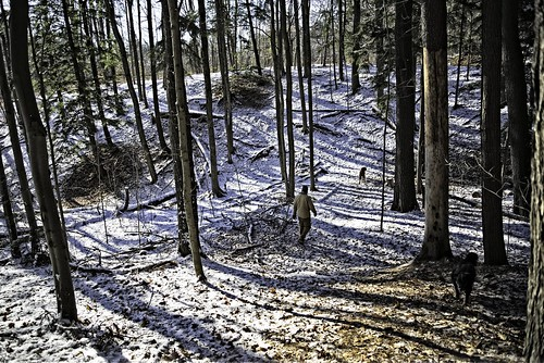winter dogs mike woods greenwood yogi ajax onrario elu d600 greenwoodconservationarea briandtucker