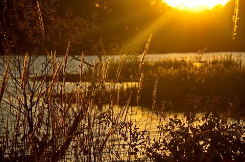 sunset lake water landscape southcarolina upstatesc