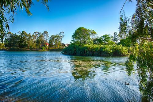trees lake water landscape lakes forestlake