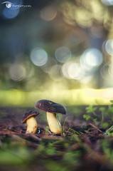Setas / Mushrooms