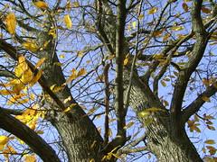 pasteluri de toamnă/pastels of autumn
