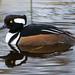 Finatic 's iNaturalist Stream has added a photo to the pool:San Diego County, California, USeBirdebird.org/ebird/view/checklist?subID=S20987055