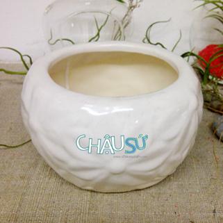 chausu24h.com | chau su | chau su my nghe