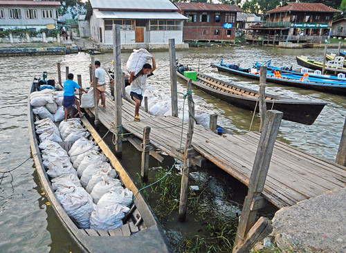 Unloading Bags of Green Tomatoes from Boats on Inle Lake
