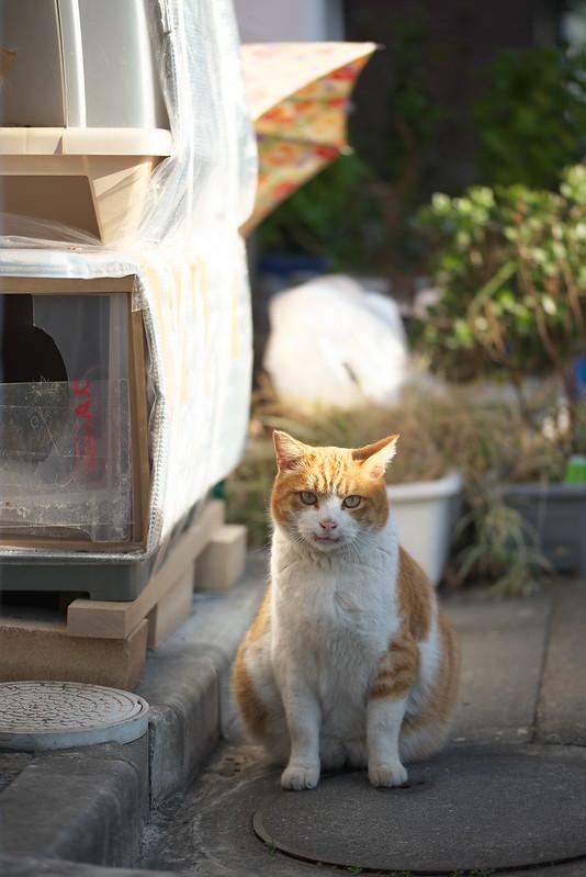 東京路地裏散歩池袋のネコ 2015年1月5日