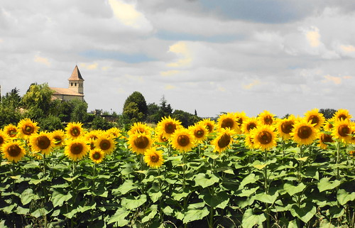 Cheerful sunflowers and moody summer sky