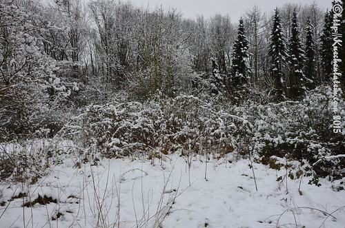 Schneelandschaft Kronshagen Januar 2015 (1)