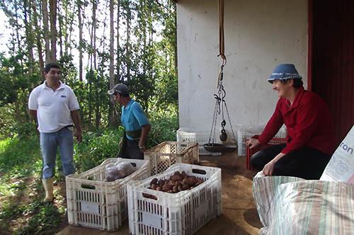Distribuição de hortaliças e legumes na horta coletiva.jpg