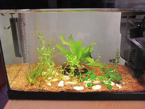 acquario - piante da acquario - piante acquatiche