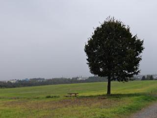 eine Magie um die Pfeile aus den Bäumen in Kleinnaundorf-Boderitz zu ziehen 2534