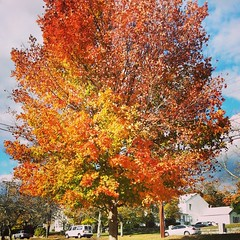 Love fall colors!  #NewEngland #Autumn