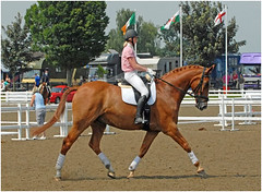 animal sports, equestrianism, english riding, eventing, dressage, mare, stallion, show jumping, hunt seat, equestrian sport, sports, recreation, outdoor recreation, equitation, horse,