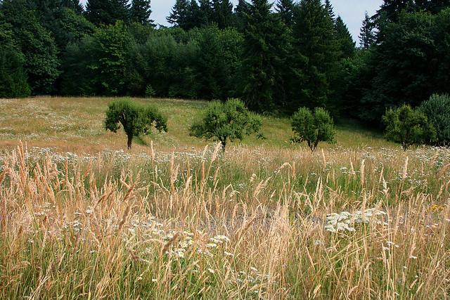 20_meadow