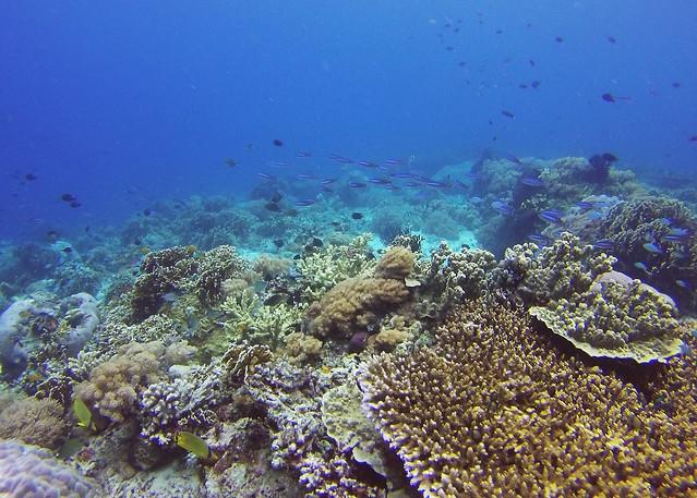Angel Reef   Moyo Island