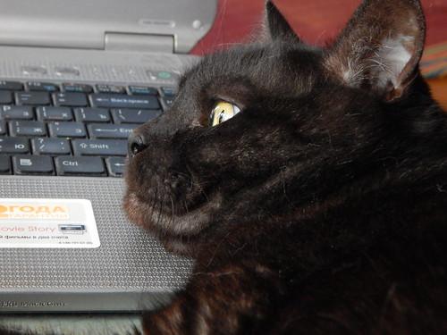 кот Муся лежит на ноутбуке
