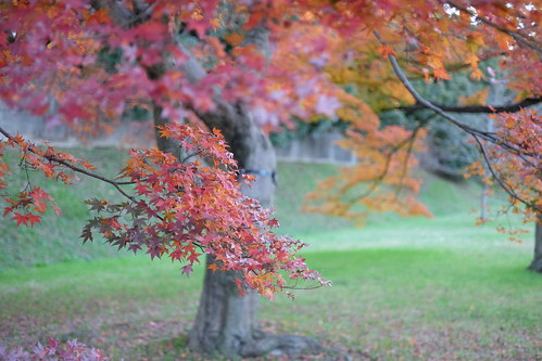 colored leaves at Imperial Palace