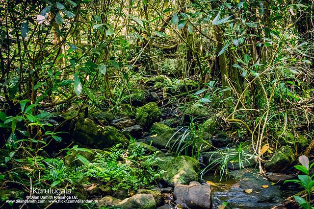 Dilan Damith Prasanga's - Green field......