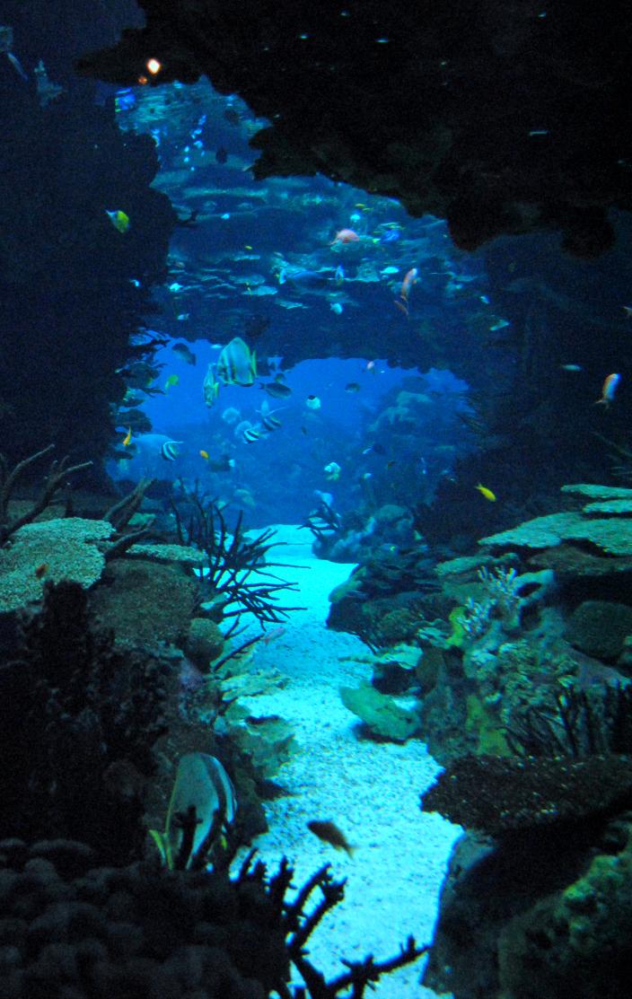 Oceanario Lisboa_OmniabyOlga (5)