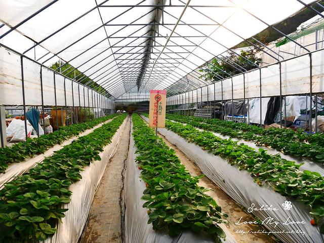 內湖採草莓圃咖啡下午茶 (9)