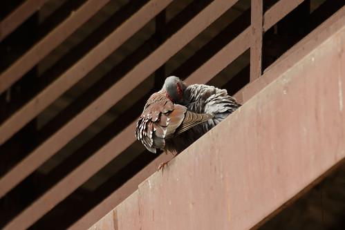 bird senegal