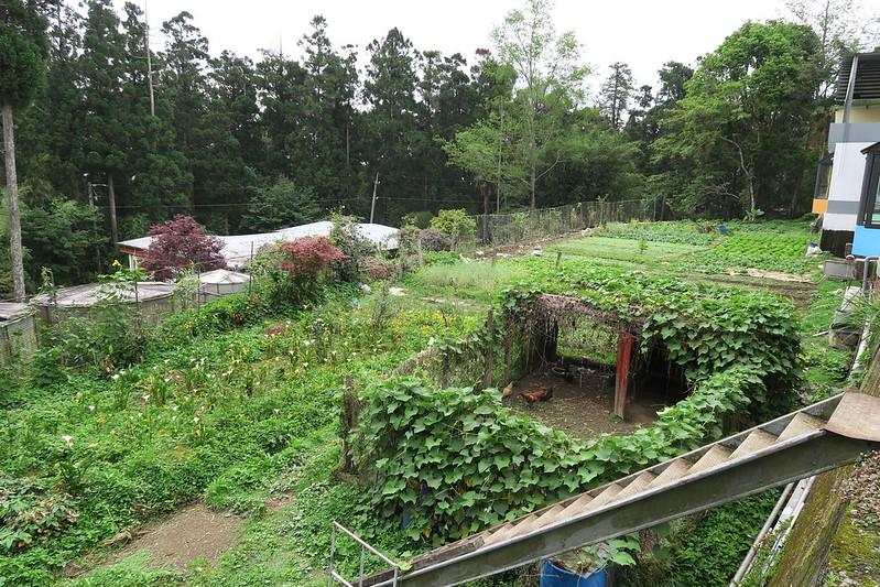 阿里山龍雲農場 (2)