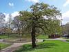 260416-oak-14