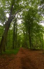 Chemin des bois de Loudon