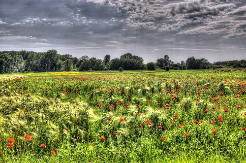 blue red sky flower color colour tree green nature beautiful field grass digital canon eos nice flora colorful hungary calm poppy hdr ponceau 70d