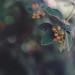 week thirty-nine by ~Staci Lee~