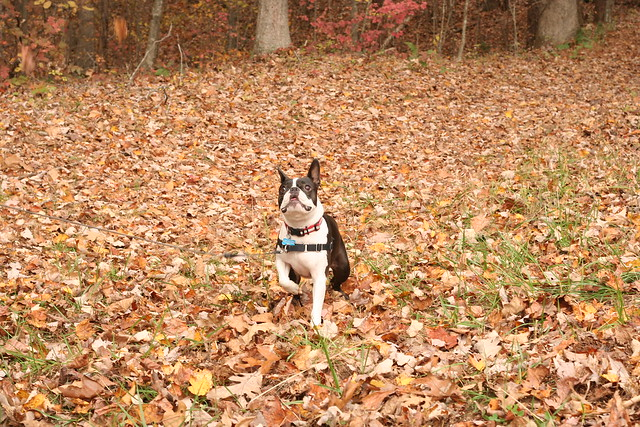 James River State Park Fall 2014 (13)