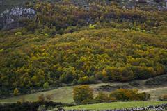 El bosque en otoño