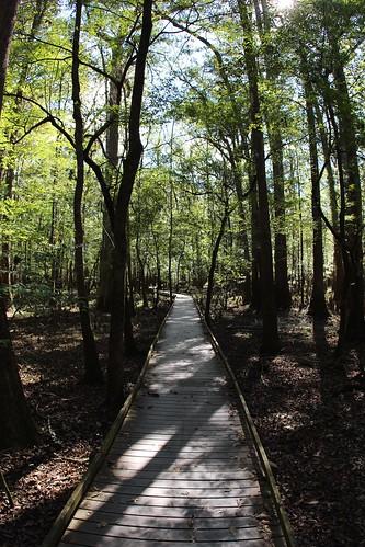 trees nps swamp boardwalk congaree baldcypress deaftalent deafoutsidetalent deafoutdoortalent